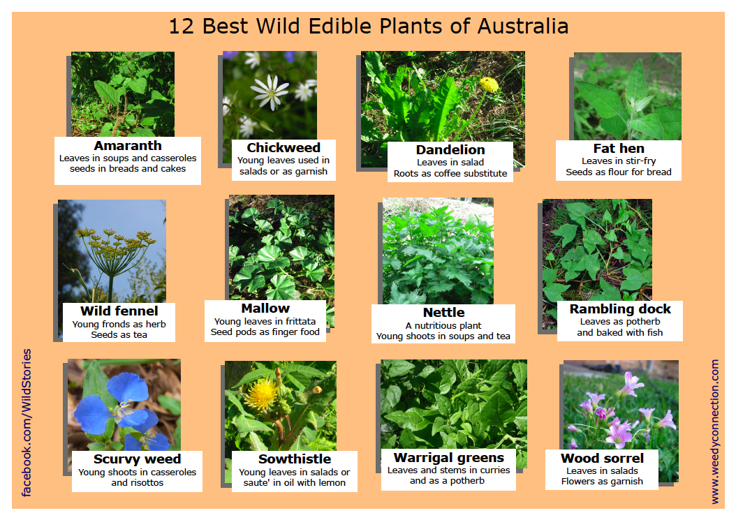 the complete guide to edible wild plants pdf